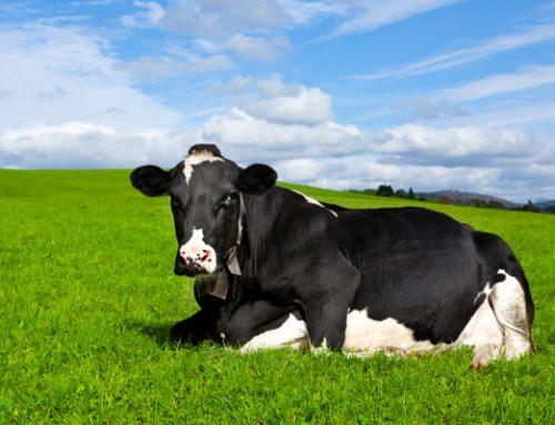 Como investi no bem-estar dos animais − Depoimento de Maurício Tonhá